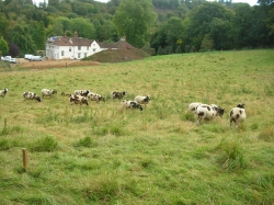 Photo 1 / 2 - 14 Sheep at Loxley