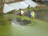 Photo 4 / 9 - Skimming Duckweed 14/02/13