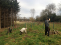 Photo 1 / 4 - Spooners Copse Greenways Planting, Jan 2012