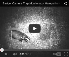 Badger Camera Trap Monitoring