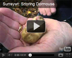 Surrey Dormice Group